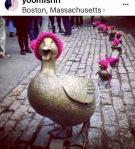ducks-in-cboston