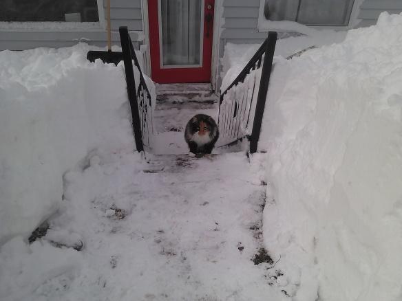 minxie in the snowimg_20170215_121631